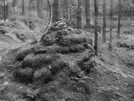 Stockhill Woods 14